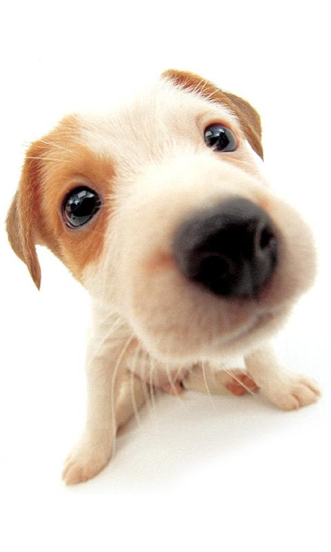 超可爱大头狗动态壁纸下载