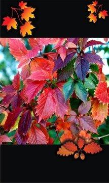 Autumn Top Free Live Wallpaper