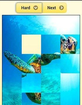 Sea turtle Jigsaw Puzzles