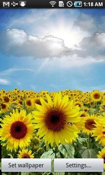 Sunflower LW Free + weather