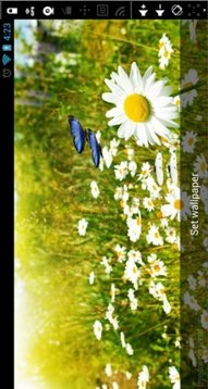 Butterfly Spring LiveWallpaper