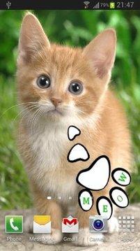 Talking Cat 3
