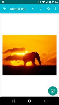 动物素材图片