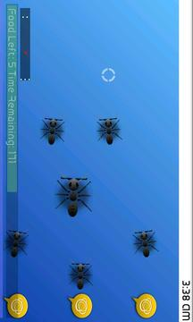 我的宠物蚂蚁