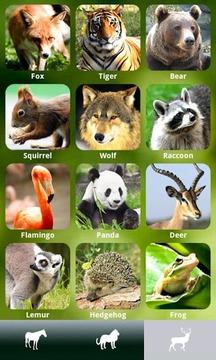 ZOOLA?动物和声音
