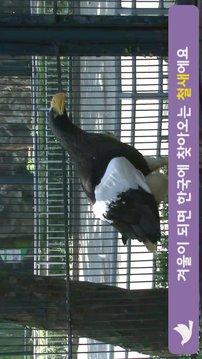 쥬니어 네이버 - Jr.Naver