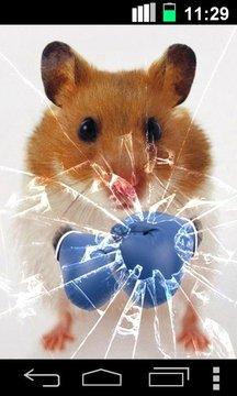 滑稽的仓鼠破获屏幕