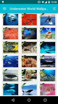 Underwater World Wallpapers!