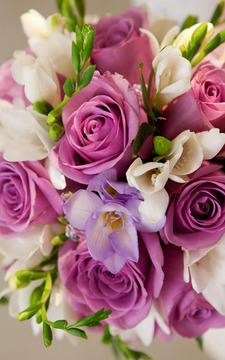 Yo Roses