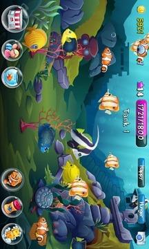 鱼儿的海底世界