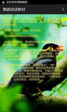 鹦鹉说话教材