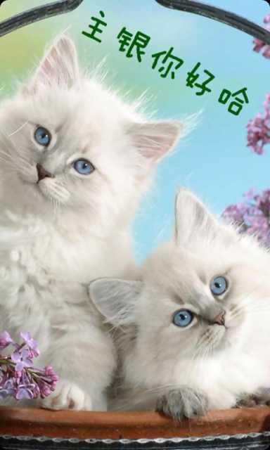 我爱宠物萌猫