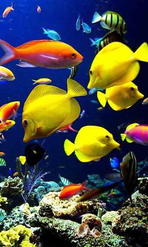 高清海底世界壁纸下载|高清海底世界壁纸手机版_最新