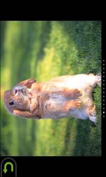 可爱兔子拼图免费版