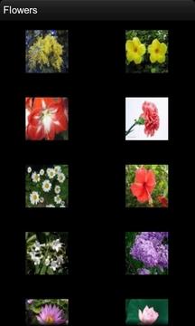 儿童花朵图谱