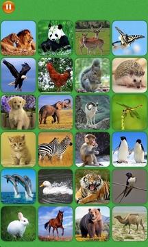 宝宝趣味识图对对碰与记忆训练-动物篇