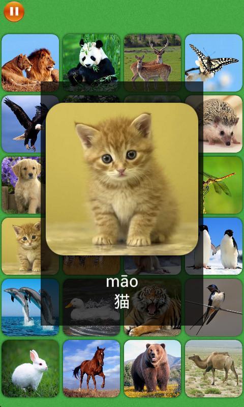 儿童识图图片动物