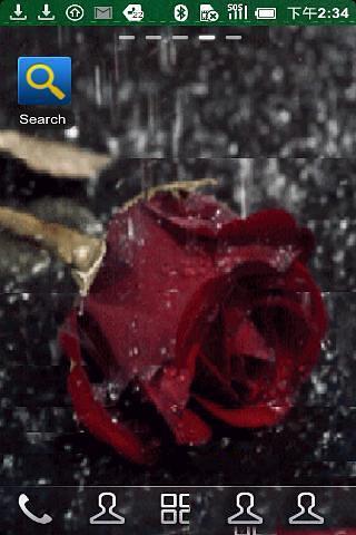 一个孤独的玫瑰在雨中