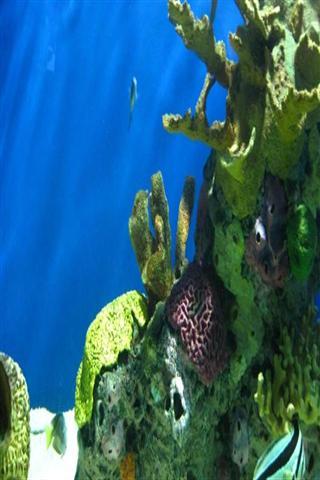 壁紙 海底 海底世界 海洋館 水族館 320_480 豎版 豎屏 手機