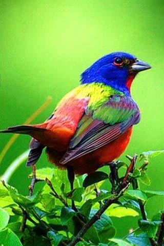 鸟叫的声音截图(6)