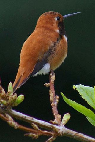 鸟叫声音截图(3)