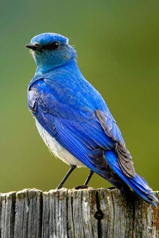 鸟叫声音截图(5)