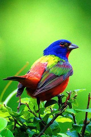 鸟叫声音截图(4)
