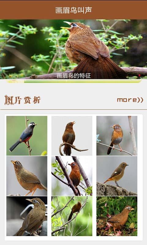 画眉鸟叫声截图(2)