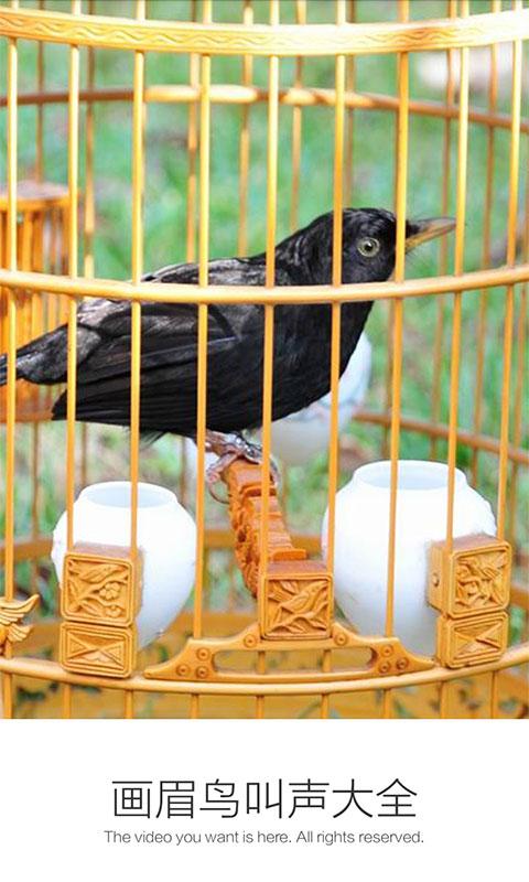 画眉鸟叫声大全截图(1)