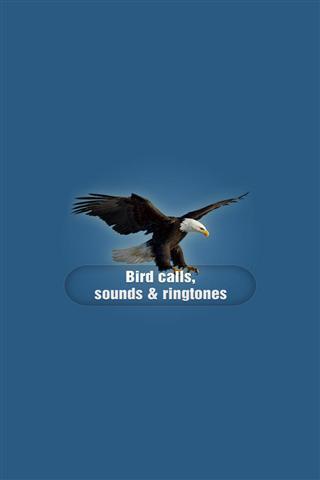 鸟的叫声截图(4)