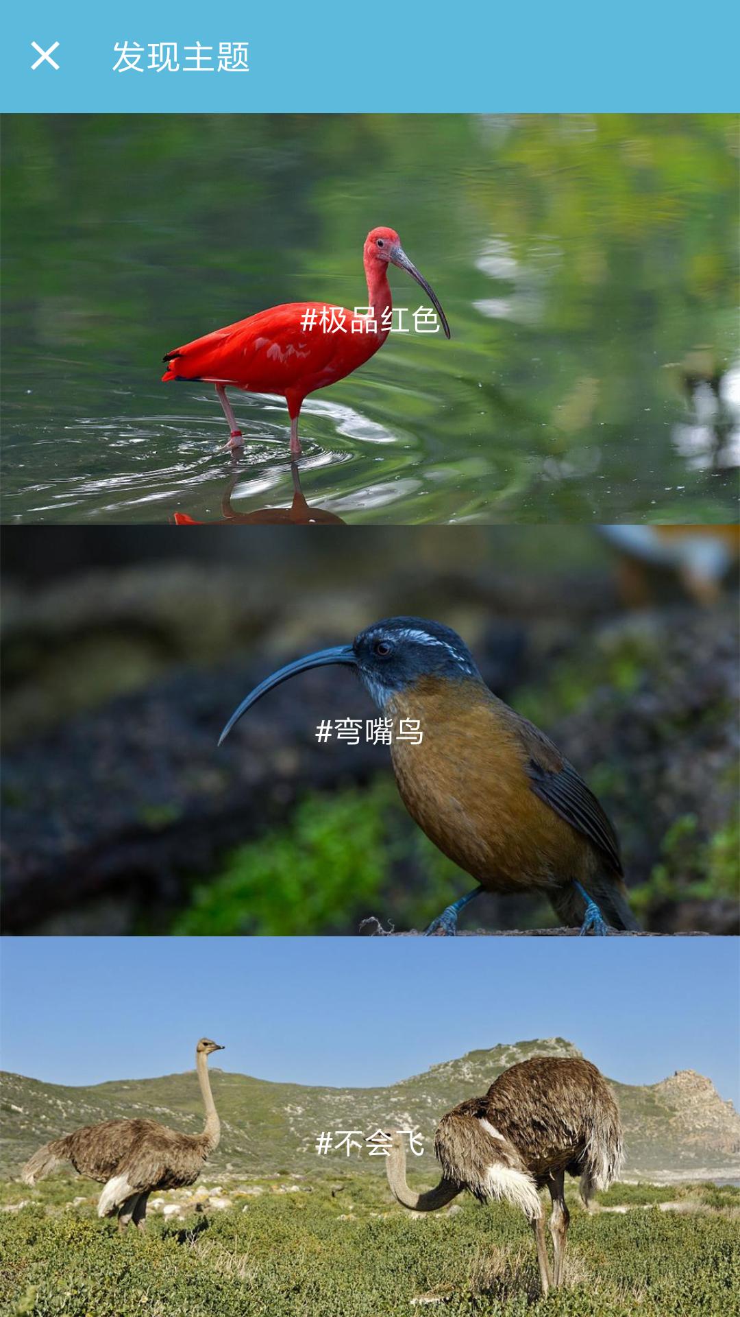 鸟叫声大全截图(4)