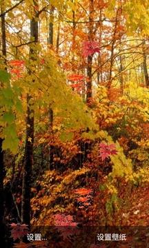 秋天树叶截图
