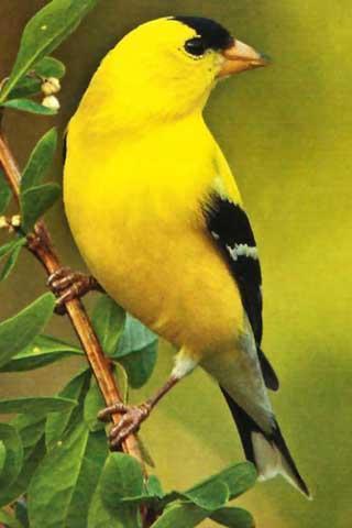 鸟叫的声音截图(1)