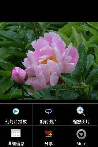 APPS花卉截图