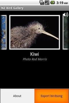 新西兰鸟类鉴赏截图