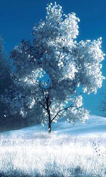 白色的树-绿豆动态壁纸截图