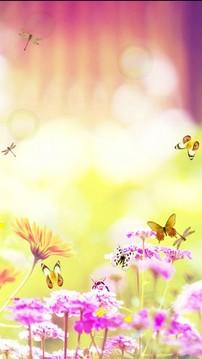 鲜花和蝴蝶截图