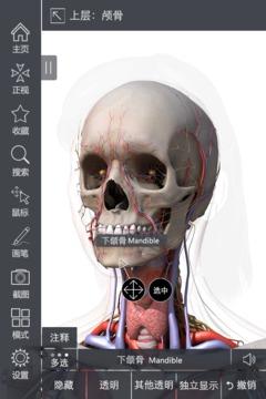 3DBody肌肉解剖截图