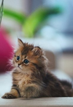 Cute Cat Cut Puzzle Game截图