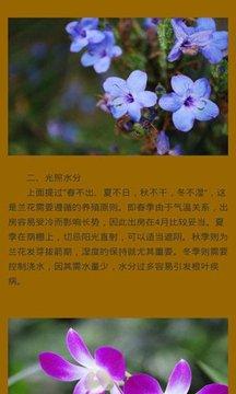 盆景花草树木种植宝典截图