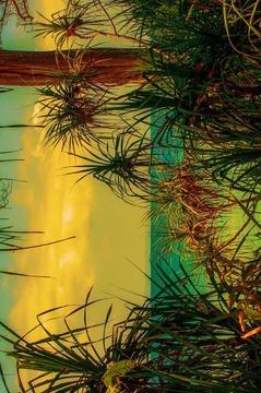 发光丛林动态壁纸截图