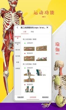 3Dbody解剖截图